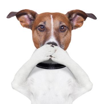 Stille Signale vom Hund – Wie wir die Kommunikation verbessern können