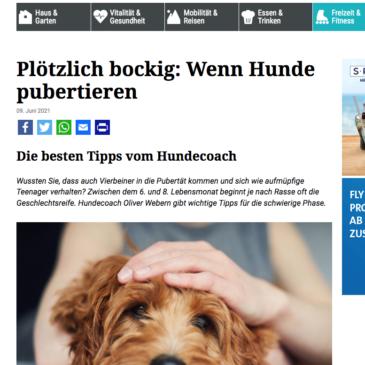 Presse: Plötzlich bockig – wenn Hunde pubertieren.